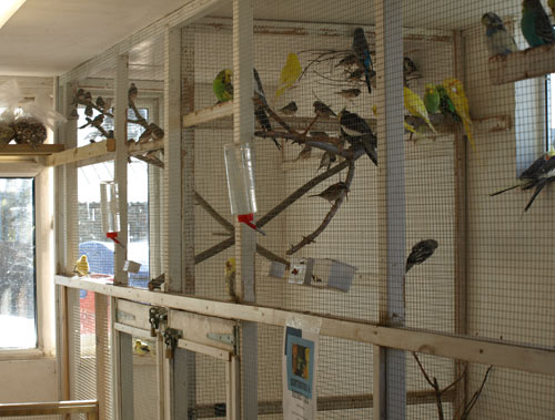 Pet Birds for Sale